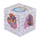 German Human Body Systems and Statistics Cube Book