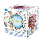 French Human Body Systems and Statistics Cube Book