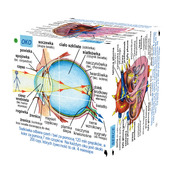 Polish Human Body Systems and Statistics Cube Book