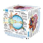 Polish Human Body Systems and Statistics Cubebook