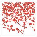 Roses Confetti