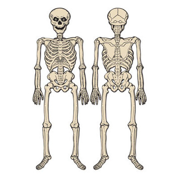 Jointed Skeleton picture