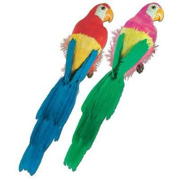 Feathered Parrots picture