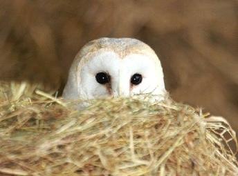 Owls Wildlife World