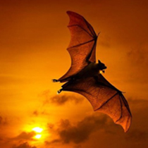 Image of bat against sunset