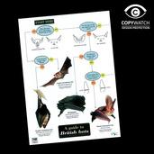 FG6 Field Guide - Bats