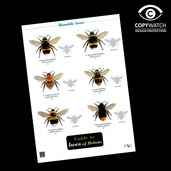 FG19 Field Guide - Bee's