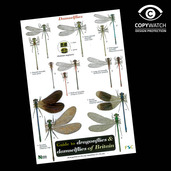 FG13 Field Guide - Dragonflies & Damsel Flies