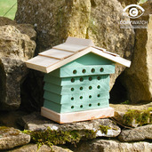 Bee Hyve