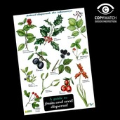 FG10 Field Guide - Fruits & Seed Dispersal