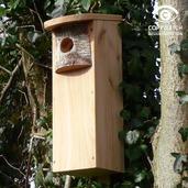 Woodpecker Box
