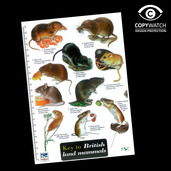 FG4 Field Guide - Land Mammals of Britain
