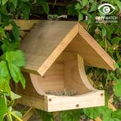 Blackbird Nester