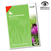 Solitary Bee Lesson Plan