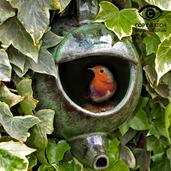 Robin Teapot Nester 2017 (Green Ceramic)