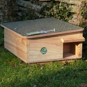 Hedgehog Feeder/House