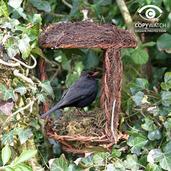 Open Nest Buddy