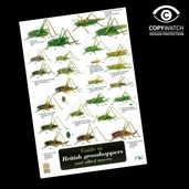 FG15 Field Guide - Grasshoppers