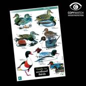 FG8 Field Guide - Wetland Birds