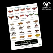 FG18 Field Guide - Day Flying Moths