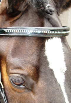 Patent Browband With Swarovski Crystals, Cob picture