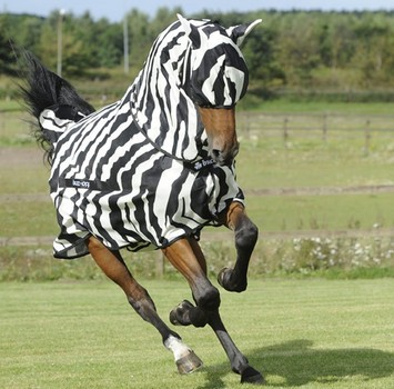 BUZZ OFF ZEBRA FLY MASK, XXS, Zebra Print-80 picture