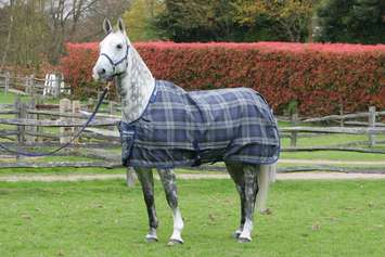 CELTIC STABLE EXTRA, 5'0, Tartan-90 picture