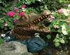 Alligator Spitter with pump