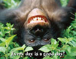 Every Day is a Good Day! Say-It Chart