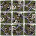 Alligators Scramble Squares®
