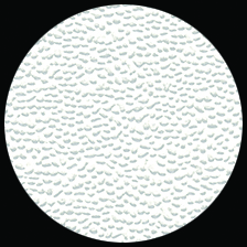 """Embossed Glossed Pebbled - White, 22"""" x 28"""" picture"""