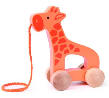 Giraffe picture