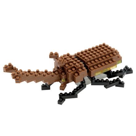 Rhinoceros Beetle picture
