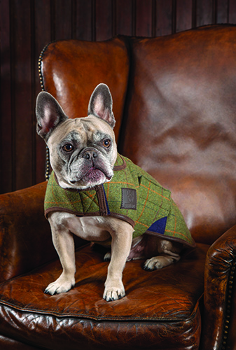 Tweed Dog Coat picture