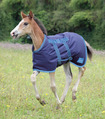 Foal Blanket