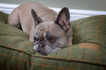 Comfort Dog Bed Mattress