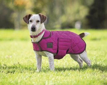 Digby & Fox Quilted Dog Coat picture