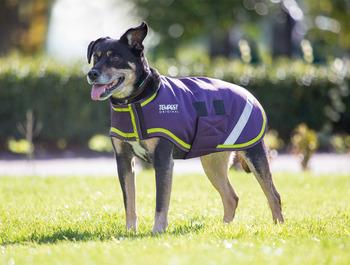 Waterproof Dog Coats picture