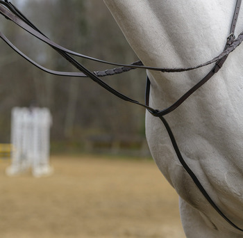 Standing Martingale picture