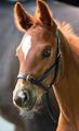 Leather Foal Slip