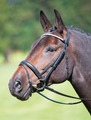 New York Flash Bridle
