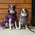 FITS Dog Coats