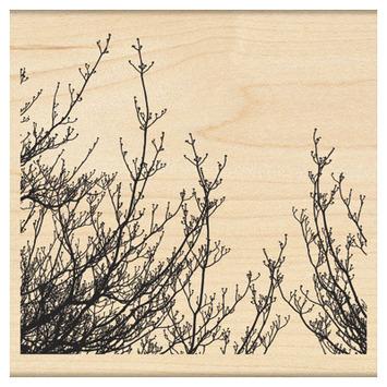 delicate branches picture