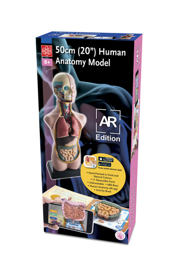 """20"""" Human Anatomy Model AR Version picture"""