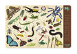 Insects Two-Sided Placemat additional picture 1