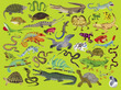 Reptiles & Amphibians Thirty-Six Animal Puzzle additional picture 1