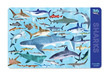 Sharks Two-Sided Placemat additional picture 1