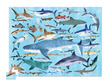 Sharks Thirty-Six Animals Puzzle additional picture 1