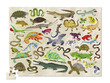 Reptiles & Amphibians Thirty-Six Animals Puzzle additional picture 1
