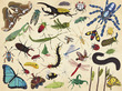 Insects Thirty-Six Animals Puzzle additional picture 1